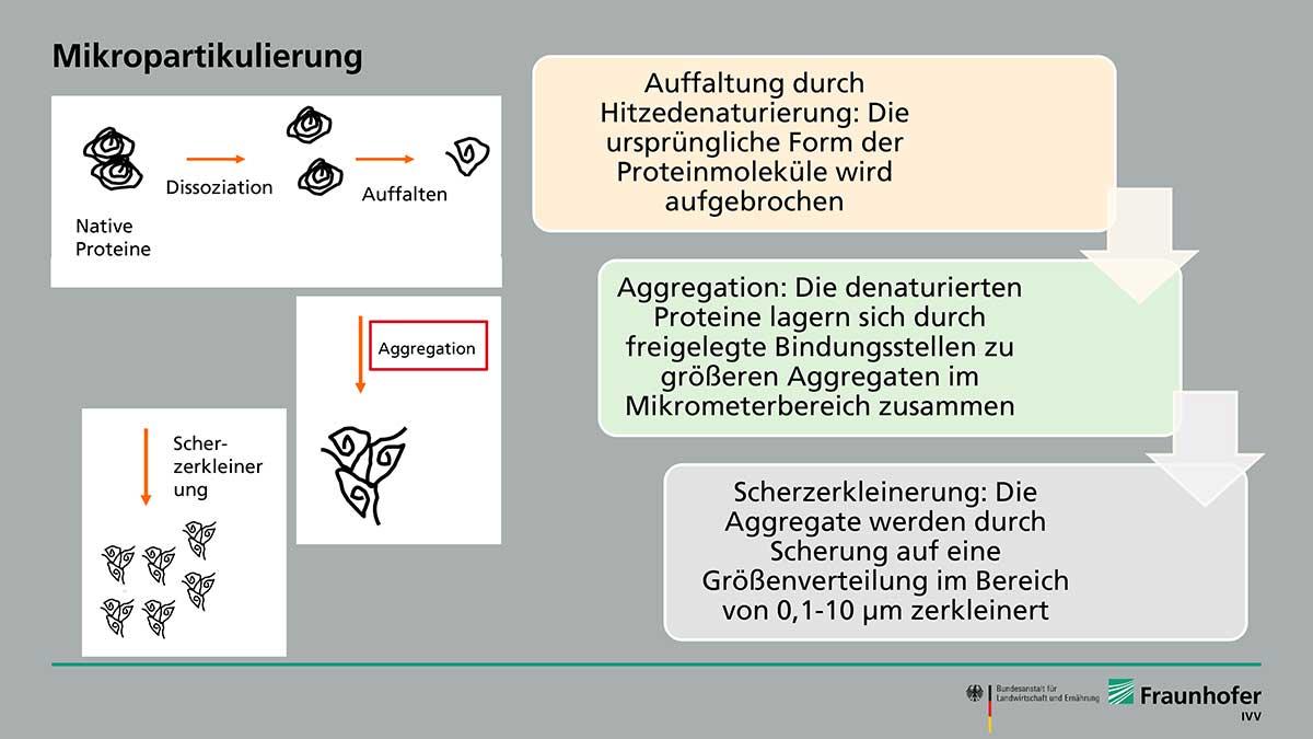 Fraunhofer Forscher*innen zerkleinern Lupinen- und Erbsenprotein mittels Mikropartikulierung und gelangen so an Fettaustauschstoffe auf pflanzlicher Basis.
