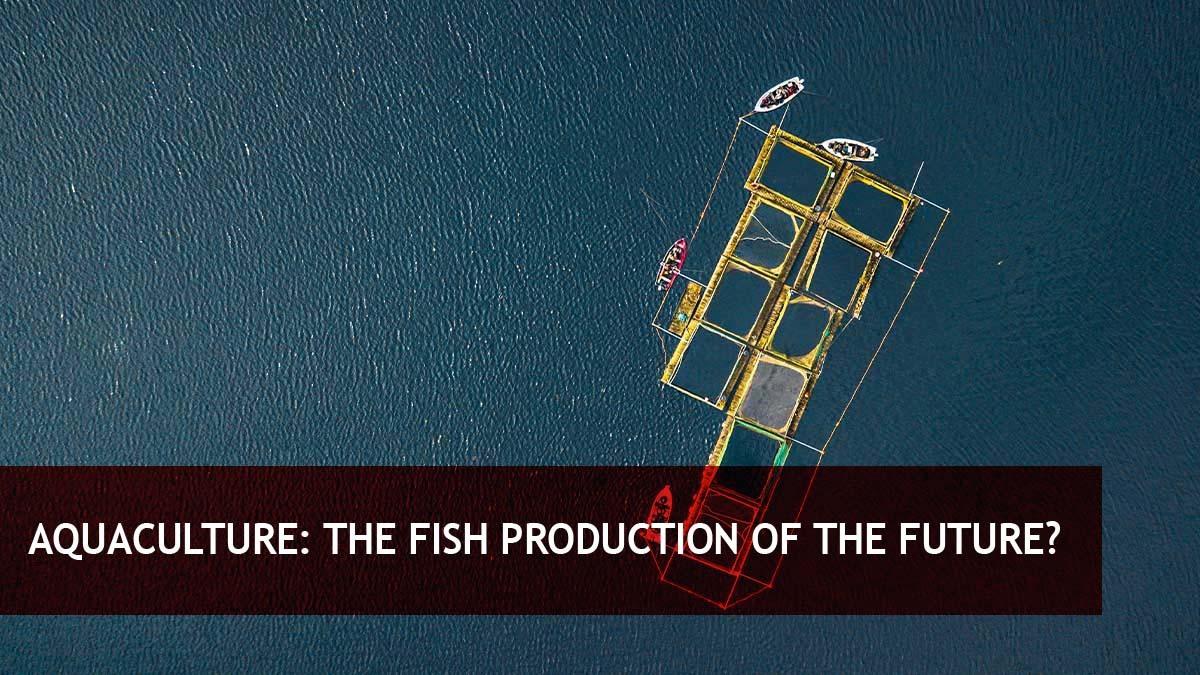 Aquaculture: The fish production of the future?