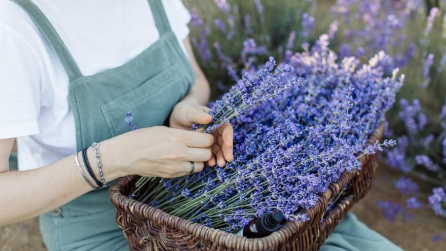 SoothingLaven Purple of Anastasia Shuraeva of Pexels