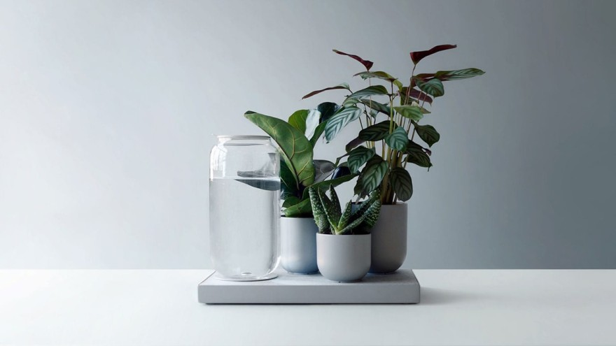 Easy-care houseplants: the self-irrigating Tableau.